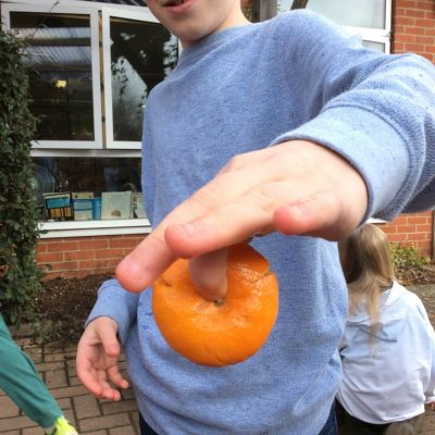 Which fruit survives best after being dropped from 2m?
