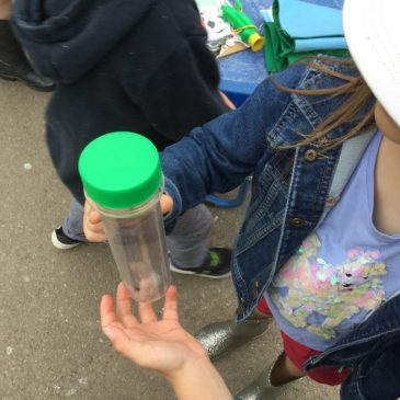 We started to look for some minibeasts….